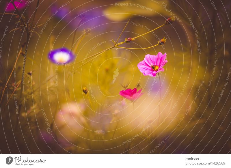 dreamy II Elegant Style Nature Plant Summer Beautiful weather Flower Grass Blossom Wild plant Flower meadow Bud Flowering plant Part of the plant Park