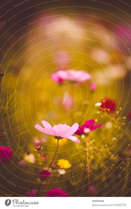 Nature Plant Green Beautiful Summer Flower Relaxation Yellow Blossom Grass Style Garden Moody Pink Park Dream