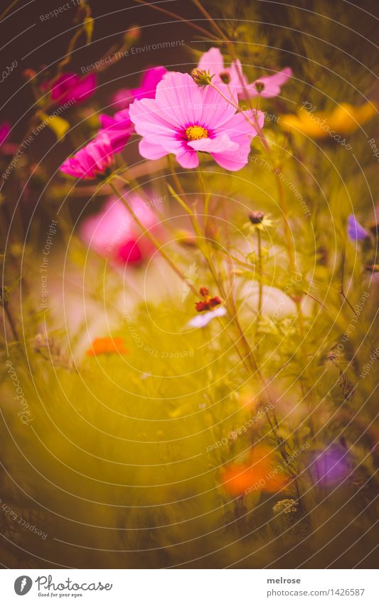 small seconds Elegant Style Design Nature Plant Summer Beautiful weather Flower Bushes Blossom Bud Flower meadow Grass blossom Garden Park spot of colour