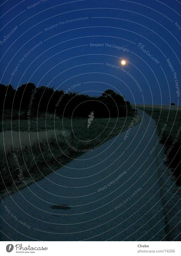 Tree Blue Grass Lanes & trails Moon Full  moon Moonlight