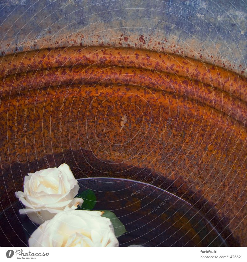 Water Old Calm Relaxation Rose Grief Peace Derelict Rust Distress Surface Bucket Peaceful Containers and vessels Pensive Spa