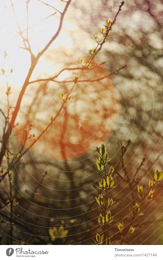 The big way. Nature Sun Sunlight Spring Beautiful weather Plant Growth Green Orange Black Branch Leaf Leaf bud Lens flare Warmth Hope Beginning Colour photo