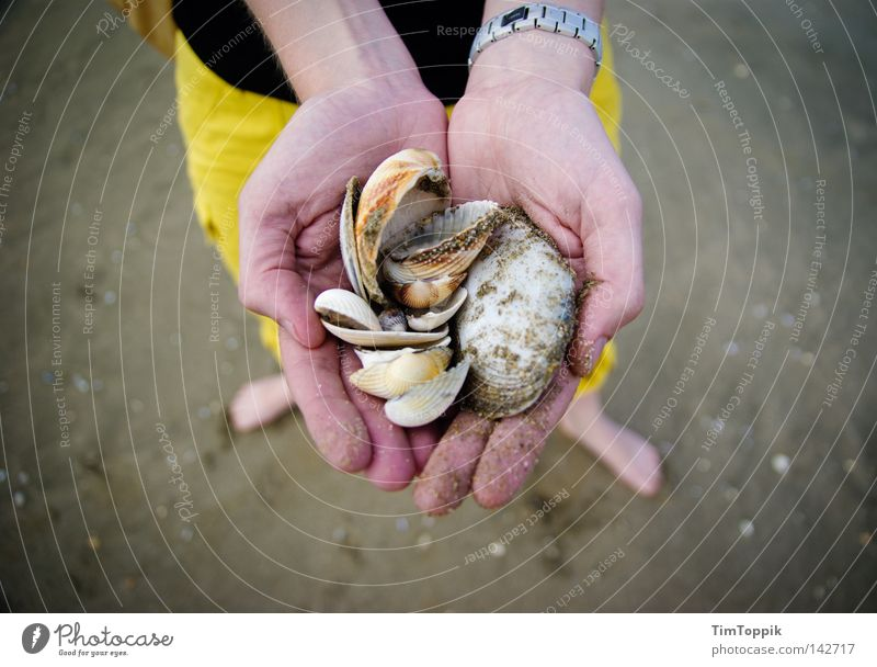 Mme Coquillage Mussel Mussel shell Beach Beach life Summer Sand Hand Fingers Woman Feet Vacation & Travel Summer vacation Relaxation Walk on the beach Ocean