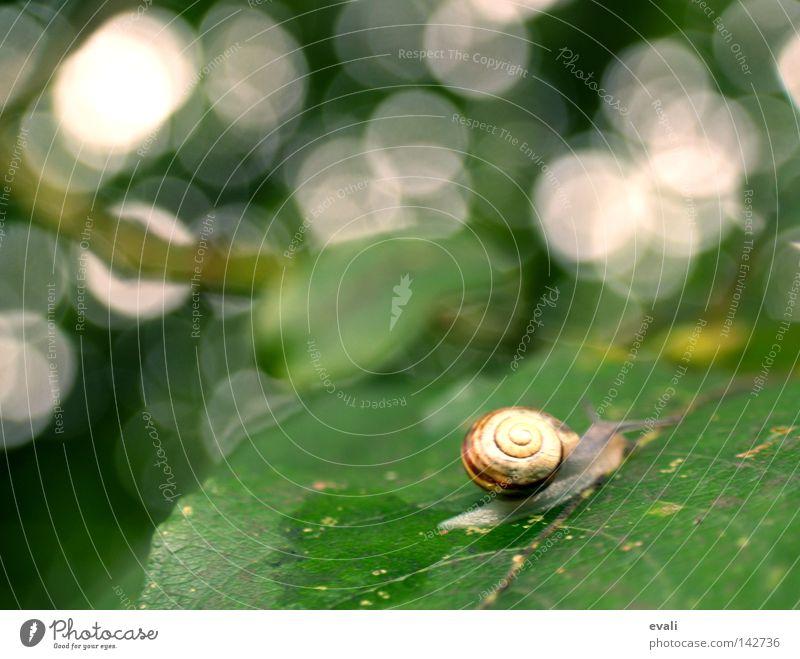 Time sometimes flies like a bird, sometimes crawls like a snail. Green Leaf Tree White Snail shell Tracks Mucus Trail of mucus Crawl Slowly slug Blur Branch