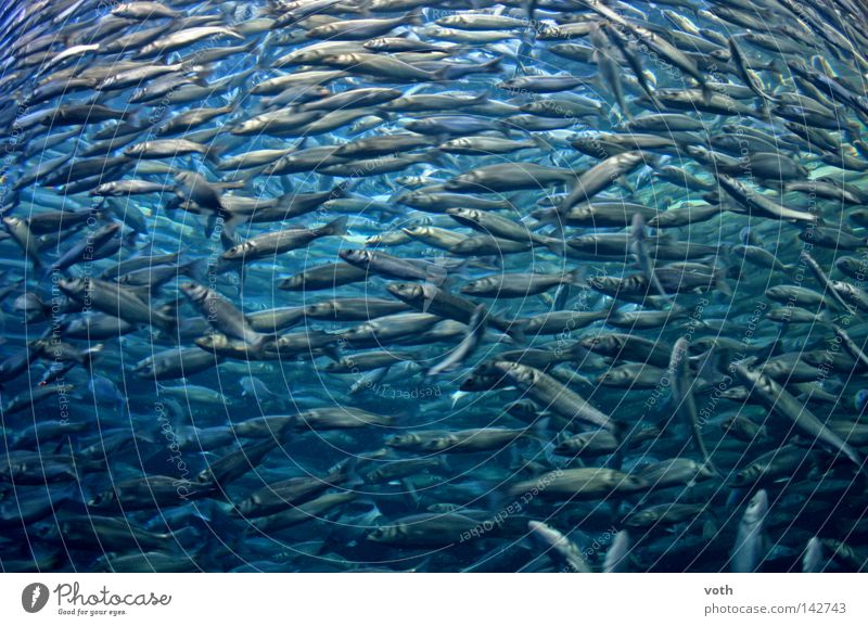 Water Ocean Blue Animal Lake Fish Dive Fishing (Angle) Flock Seafood Shoal of fish