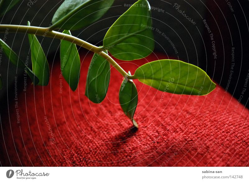 Green Plant Red Esthetic Cloth Touch Visual spectacle