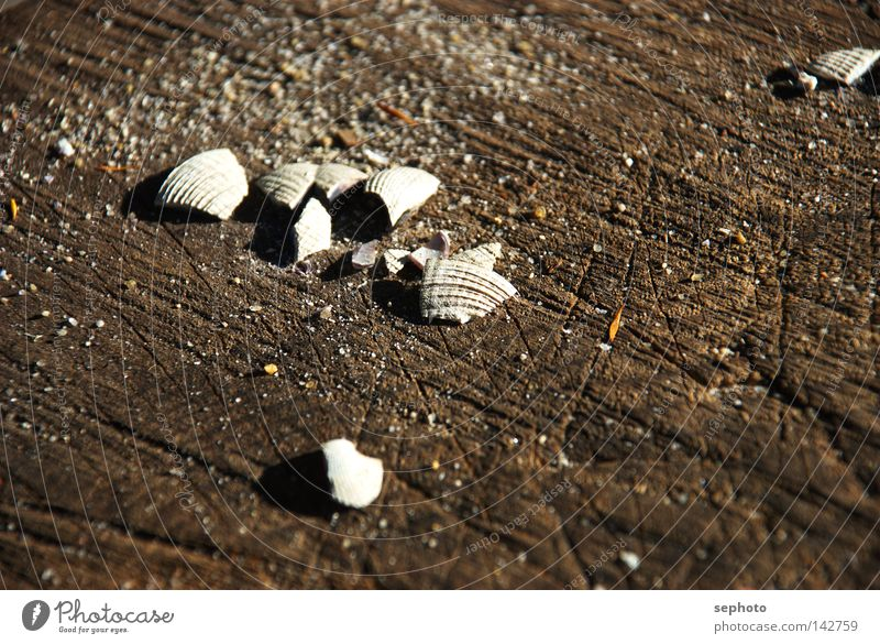 shell seeker Mussel New Zealand Wood Summer Autumn Bowl Collection Wood flour Australia + Oceania Lake Crustacean Brown Blur Grief Sea water Pacific Ocean