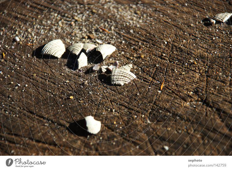 Tree Summer Ocean Beach Calm Autumn Wood Coast Sand Lake Park Brown Circle Break Grief Bay