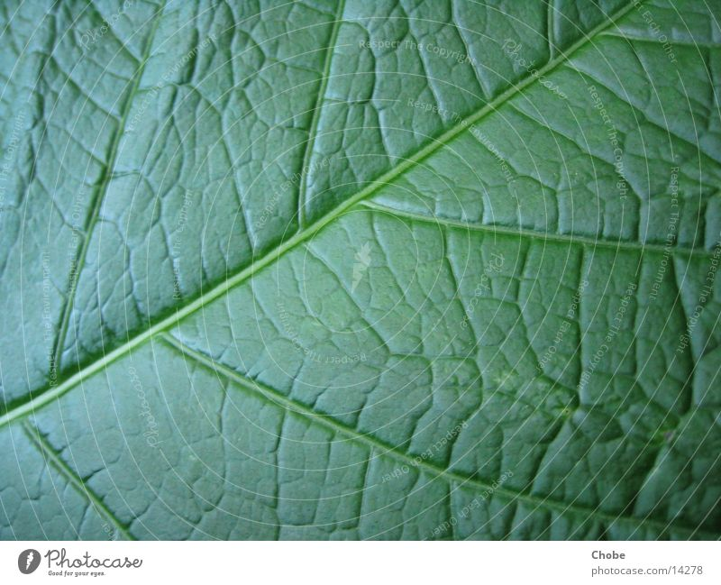 leaf green Leaf Green Structures and shapes Macro (Extreme close-up)