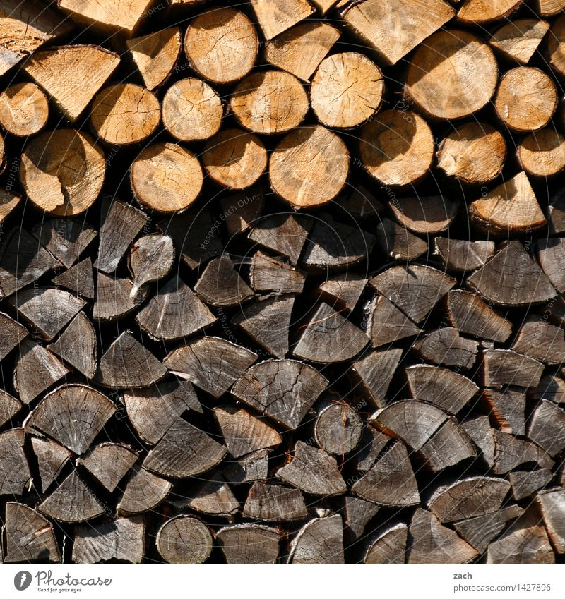 Woodstock Winter Energy industry Renewable energy Energy crisis Plant Tree Firewood Fuel To dry up Growth Brown Fireside Stack of wood Burn Subdued colour