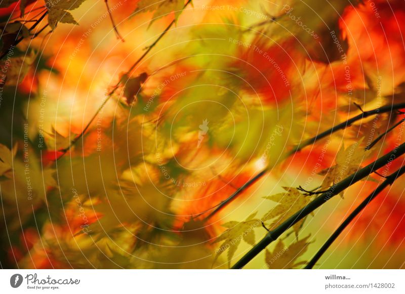 Green Red Leaf Yellow Autumn Autumn leaves Autumnal Autumnal colours Watercolors Leaf canopy Colour noise
