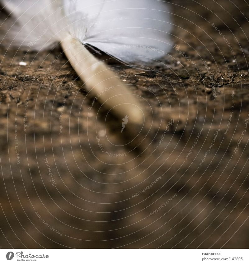 Hair and hairstyles Bird Earth Hair Ground Floor covering Feather Pelt Cloth Under Common Reed Rachis Feather shaft Fuzz Bobbin Plucked
