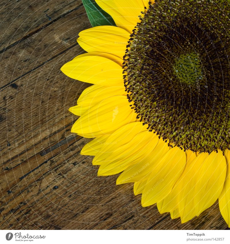 Another sunflower Sunflower Flower Table Kitchen Plant Blossom Wood Spring Summer Yellow Living or residing Kitchen Table Blossoming Wood grain Decoration