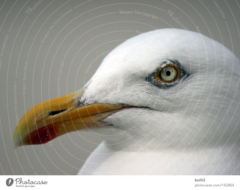 Look me in the eye! Seagull Bird Beak Netherlands Beach Avaricious North Sea Texel Eyes