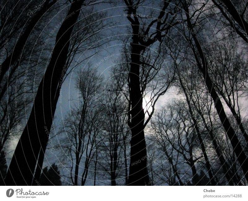Sky Tree Blue Dark Creepy Moon Mystic Eerie