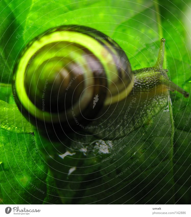 Green Leaf Animal Snail Bowl Spiral Snail shell Rotated Mollusk Slow motion Greasy