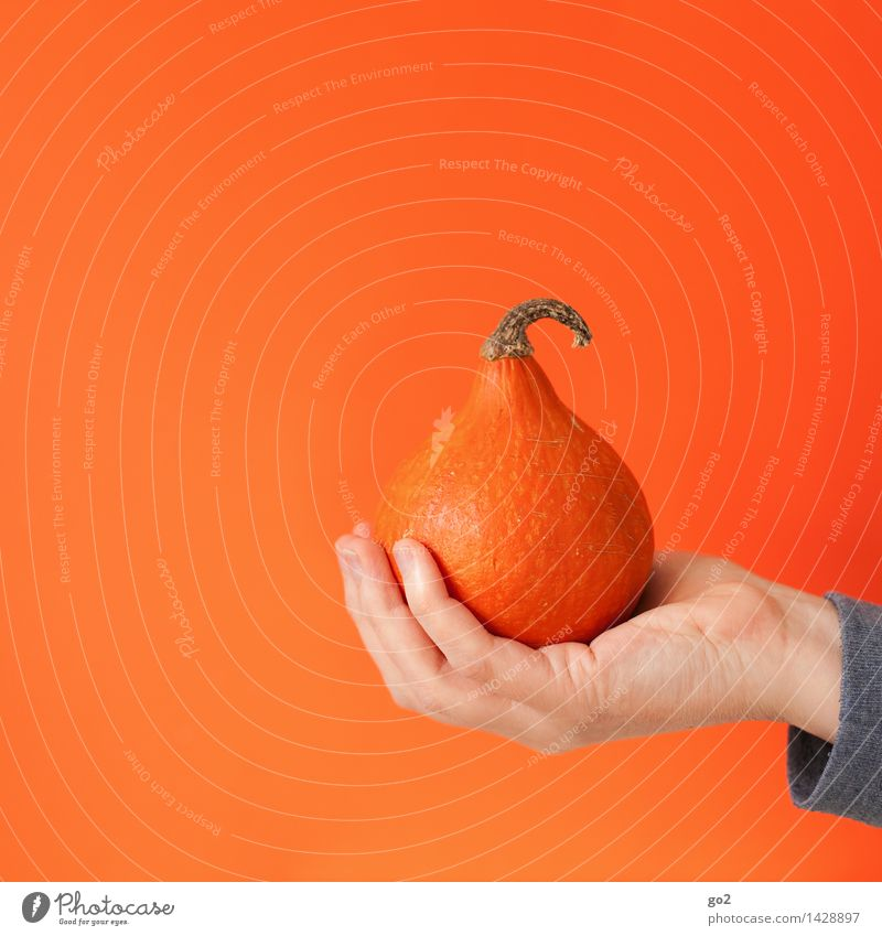 Hand Eating Healthy Small Food Orange Esthetic Nutrition Fingers To hold on Vegetable Delicious Organic produce Autumnal Vegetarian diet Pumpkin