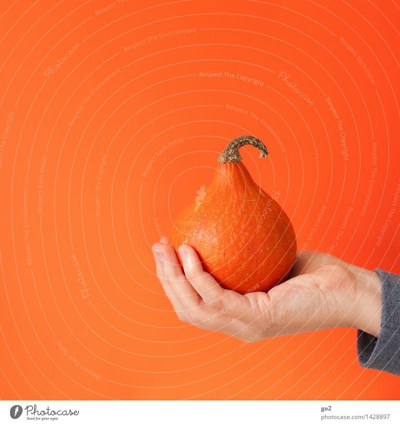 pumpkin season Food Vegetable Pumpkin Pumpkin plants Pumpkin time Nutrition Eating Organic produce Vegetarian diet Hand Fingers To hold on Esthetic Healthy