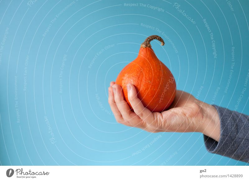 Human being Blue Hand Adults Autumn Eating Healthy Small Food Orange Esthetic Nutrition Fingers To hold on Vegetable Delicious