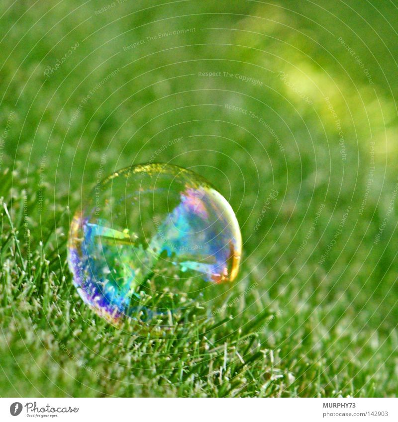 Help, don't tickle so..... or I'll explode! Soap bubble Air bubble Bubble Lawn Glass ball Sphere Lie Prismatic colors Rainbow Green Transparent Banner Sensitive