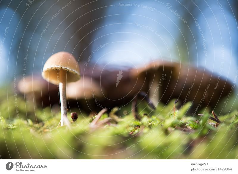 at ground level Nature Plant Earth Autumn Moss Forest Small Blue Brown Gray Green Mushroom Woodground Diminutive Ground level Macro (Extreme close-up)