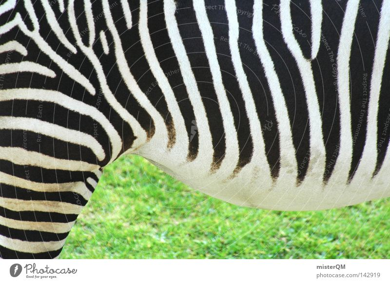 Mama, there's a zebra in the garden... Zebra Pattern Structures and shapes Pelt Zoo Green Grass Animal Living thing Zebra crossing Quagga Odd-toed ungulate