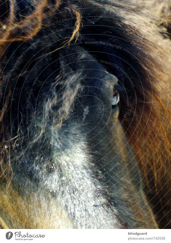 Eyes Animal Dark Hair and hairstyles Brown Walking Horse Leisure and hobbies Pelt Discover Racing sports Mammal Pallid Tails Bangs