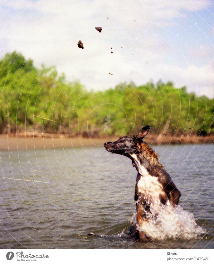 Water Dog Sun Summer Joy Animal Playing Movement Sand Happy Jump Coast Lake Swimming & Bathing Drops of water Pelt