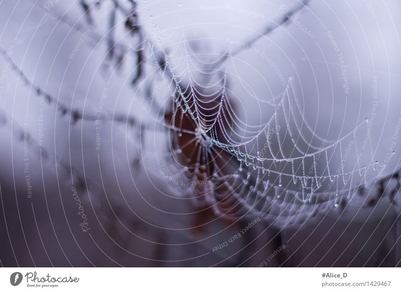 Nature Animal Autumn Exceptional Drop Dew Delicate Spider Spider's web Catching net