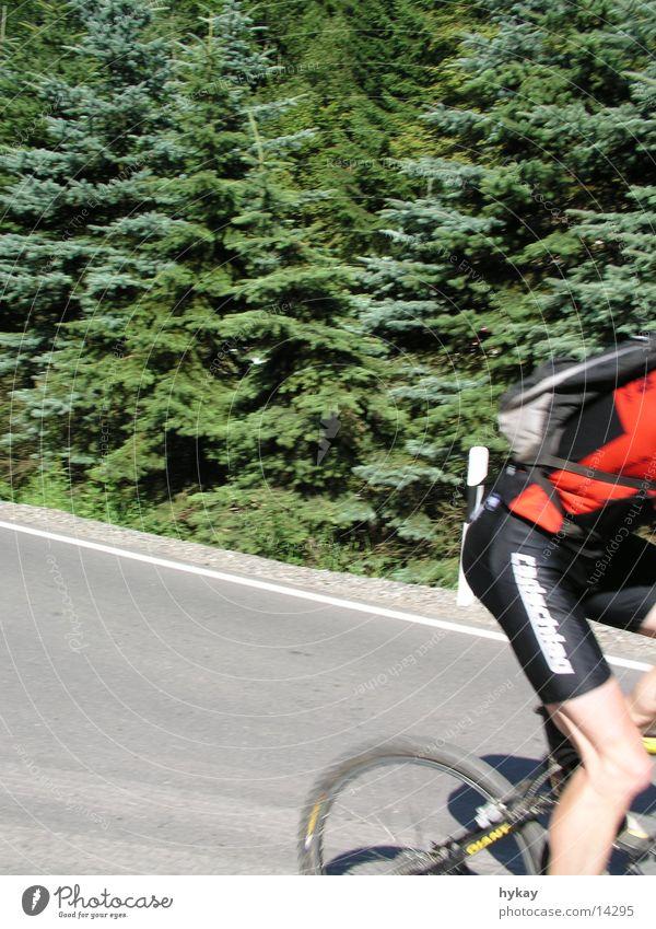 Tree Sun Street Sports Forest Bicycle Twig Marathon Erz Mountains