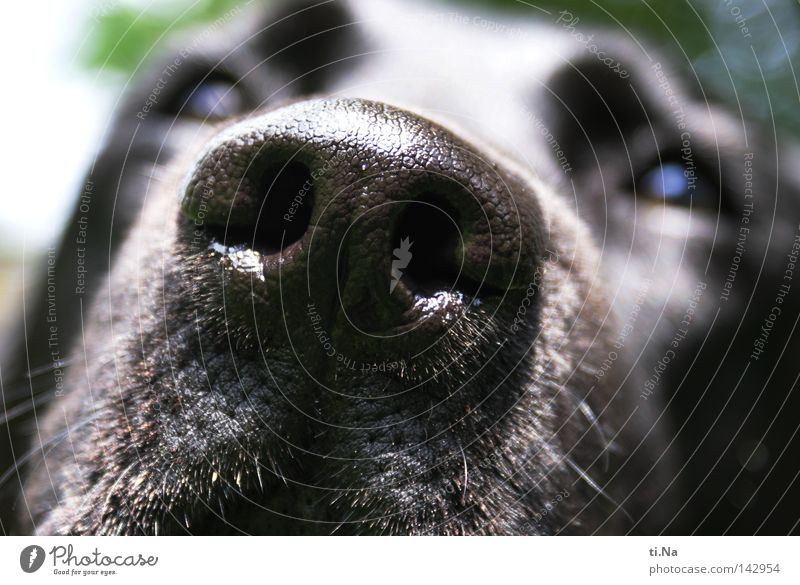 Dog Green Summer Animal Black Eyes Funny Contentment Going Walking Natural Nose Communicate Pelt Animal face