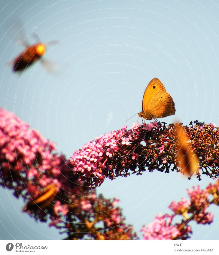 Nature Blue Colour Animal Nutrition Food Movement Blossom Garden Pink Aviation Wing Living thing Blossoming Bee Insect