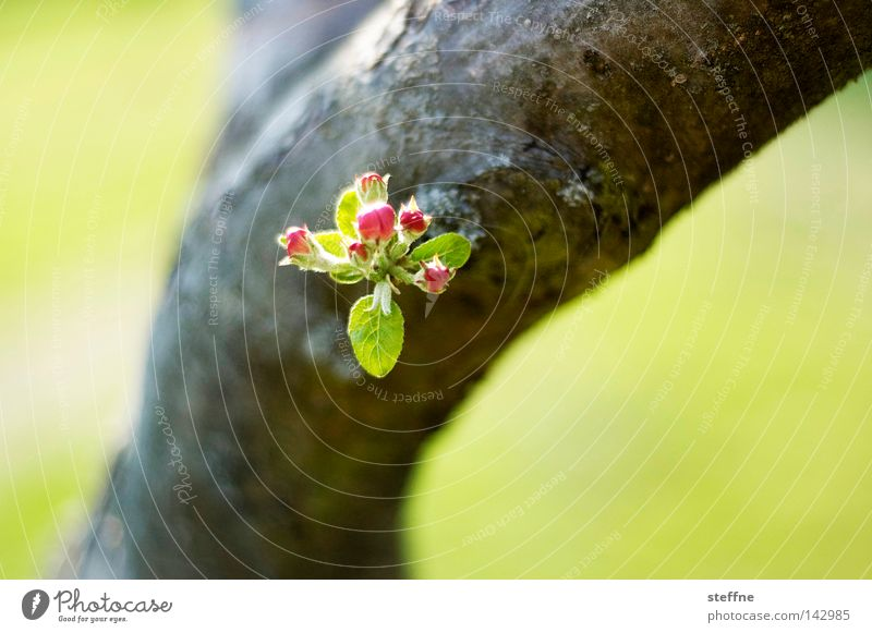 Nature Green Tree Leaf Spring Blossom Blossoming Tree trunk Twig Bud Tree bark