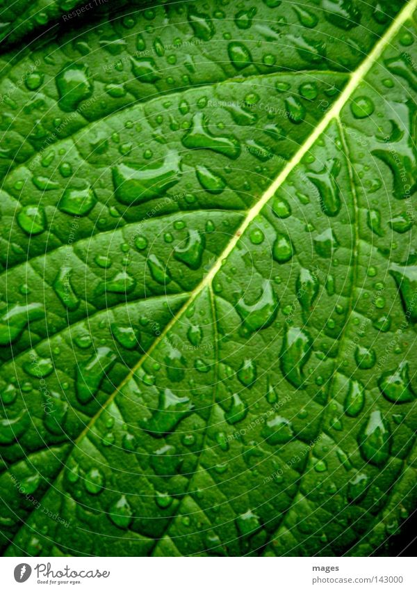 Drizzled Plant Water Drops of water Rain Leaf Foliage plant Glittering Uniqueness Wet Green Colour photo Close-up Macro (Extreme close-up) Structures and shapes