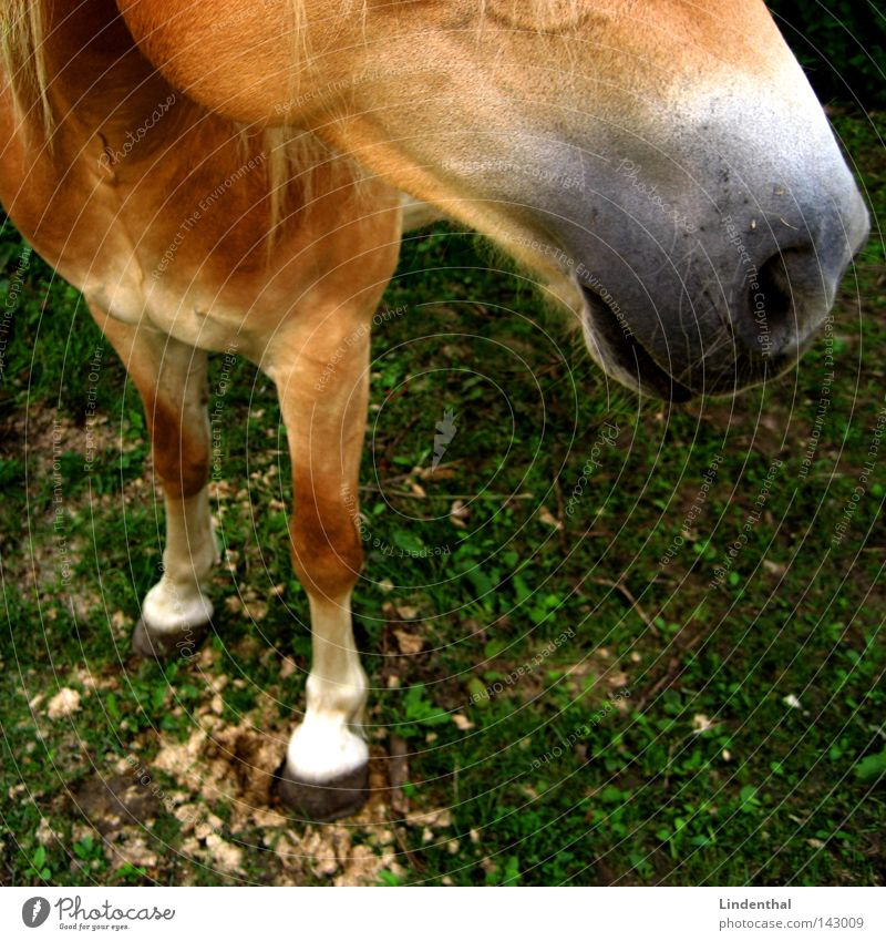 Colour Green Animal Meadow Blonde Nose Horse Mammal Strand of hair Mane