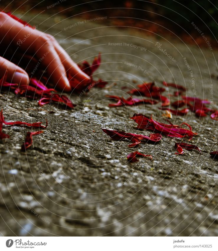 Paradoxical Silence Hand Fingers Human being Blossom leave Rose leaves Thumb Fingernail Calm Disappointment Transience Past Floor covering Edge Slope Romance