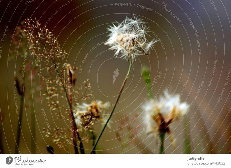 Nature Beautiful Flower Colour Environment Meadow Grass Glittering Simple Delicate Stalk Pollen Modest Stamen Illness