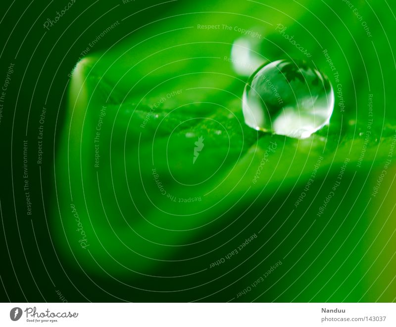 Nature Green Summer Water Leaf Calm Environment Life Glittering Fresh Idyll Drops of water Clean Round Protection