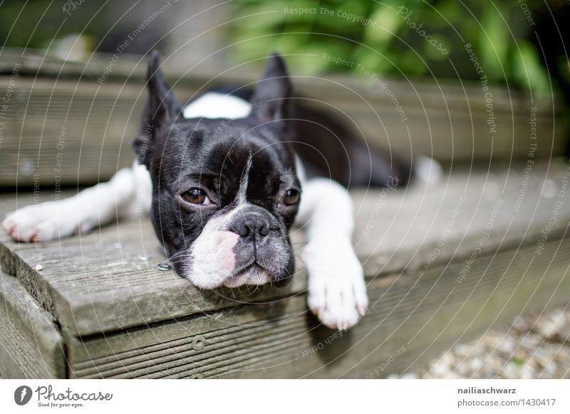 Dog Summer White Relaxation Animal Black Small Happiness Trip Observe Simple Cute Sleep Curiosity Fatigue Boredom