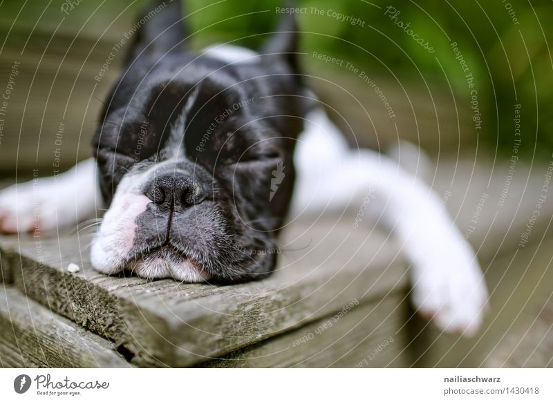 Dog Beautiful Summer White Relaxation Animal Black Natural Happy Small Contentment Idyll To enjoy Trip Simple Cute