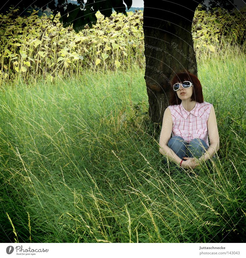 Woman Nature Tree Summer Animal Meadow Grass Dream Think Field Sit Eyeglasses Romance Peace Thought Sunglasses