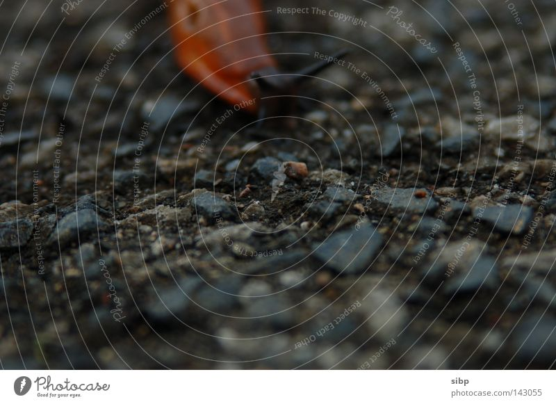 Street Stone Dangerous Ground Asphalt Snail Tar Feeble Slowly Helpless Slug Defenseless