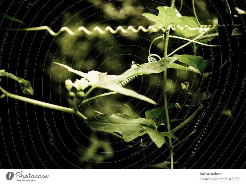 Call me for distraction Plant Iberis Communicate Summer Pflanzen Grün Verwickelt Blätter filigran Flower