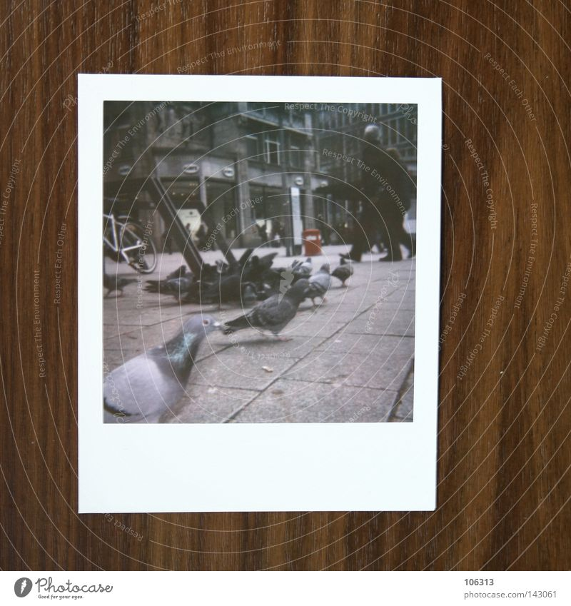 Human being Polaroid City Gray Group Bird Concrete Asphalt Traffic infrastructure Downtown Pigeon Scene