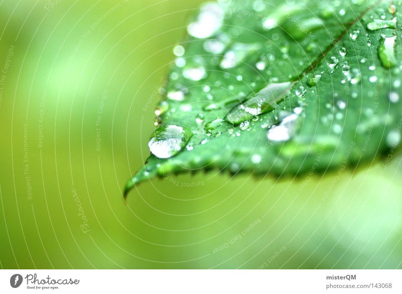 Nature Plant Beautiful Green Colour Water Leaf Spring Background picture Bright Rain Flat (apartment) Multiple Esthetic Drops of water Simple