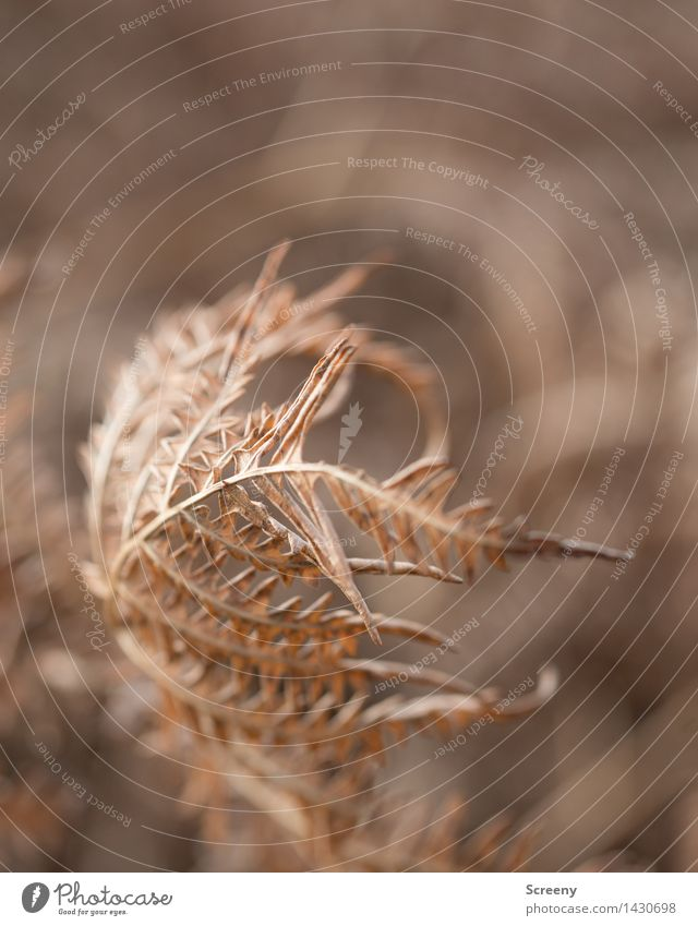 Ephemeral Nature Plant Autumn Fern Forest Faded Dry Brown Senior citizen End Transience Colour photo Exterior shot Close-up Macro (Extreme close-up) Deserted