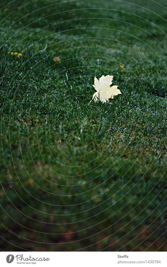 Nature Green Loneliness Leaf Yellow Autumn Meadow Grass Transience End Autumn leaves Autumnal Maple leaf Minimalistic November October