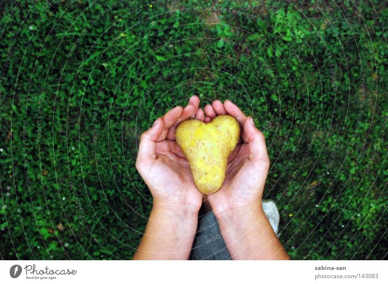 Hand Beautiful Loneliness Love Grass Heart Going Esthetic Uniqueness To hold on Vegetable Trust Doomed Carrying Caution Remainder