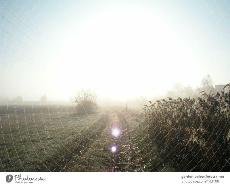 Sky Sun Winter Snow Lanes & trails Field Frost Common Reed Hoar frost