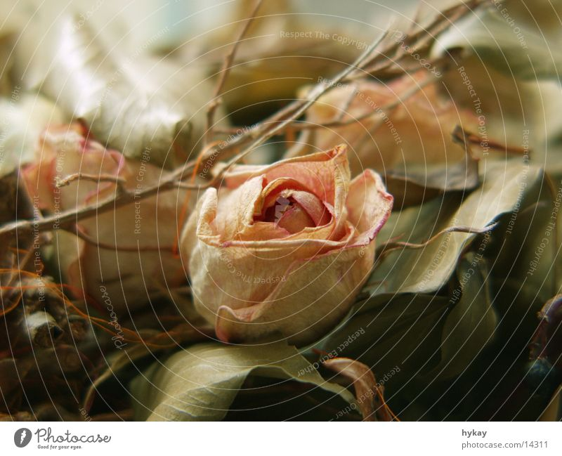 Leaf Soft Rose Dry Bouquet Pastel tone